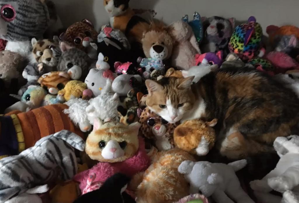 Virtual Community Talent Show - cat